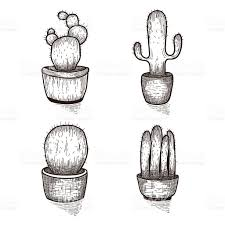 drawn cactus hand drawn pencil and in color drawn cactus hand drawn