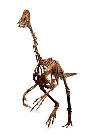 anzu dinosaur wikipedia