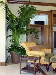 Small Indoor Trees by The Popular Palm Plantscapers