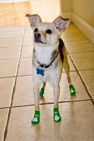 non slip socks power paws prevent your from skidding