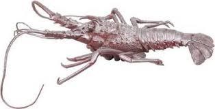 comment cuisiner un homard congelé comment cuire un homard congelé cardplayerr com