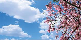 pink tree skypanels fluorescent light cover decorative diffuser