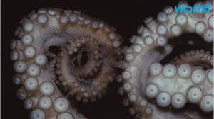 Seeking Octopus Attack Of The Cyber Octopuses Seeking Funding