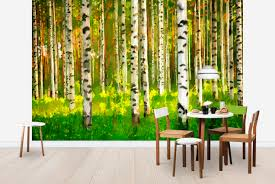 birch forest oil painting wall mural photo wallpaper photowall