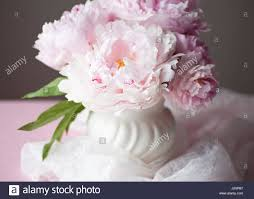 Peony Floral Arrangement Pink Peony Flower In Full Stock Photos U0026 Pink Peony Flower In Full