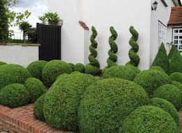 Topiary Cloud Trees - home decoration box spiral topiary in planter with juniper cloud
