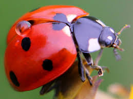 Pictures Of Tiny Red Bugs by Fascinating Bug Facts Hgtv