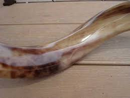 shofar mouthpiece trumpet players professional yemenite shofar 577 www theshofarman