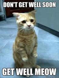 Meme Get Well Soon - don t get well soon get well meow sad cat blog quickmeme