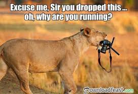 Funny Tiger Memes - top 35 funny jokes and funny images downloadfeast