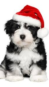 cute dog christmas wallpapers dog christmas card bearded collie waiting at by overthefenceart