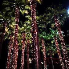 palm tree solar lights illuminate your tree trunks tree trunks palm and yards
