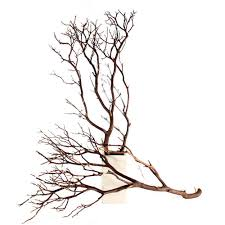 manzanita branches for sale branches 10 up to 96