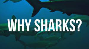 why sharks youtube