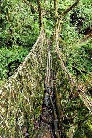 the living root bridges of india kuriositas