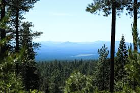 free photo landscape travel oregon forest nature trees green max