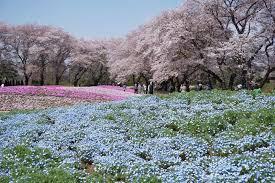 Flower Area - ryomo area area tobu japan trip