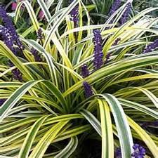 12 ornamental grasses for landscaping the home depot community