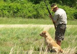 afghan hound and labrador retriever labrador retriever dog breed standards