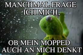 Rainy Day Meme - manchmal frage ich mich rainy day kermit meme on memegen