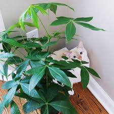 bringing nature indoors house plants that are safe for cats