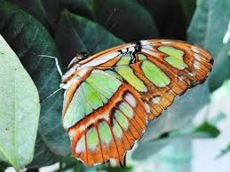 green and orange butterfly butterfly wall art butterfly home