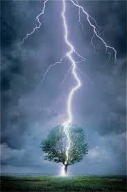 image lightning tree jpg the hunger wiki fandom