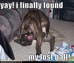 boxer dog jokes funny dogs funny pictures dog