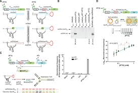 Inverted Living Genomically Encoded Analog Memory With Precise In Vivo Dna Writing