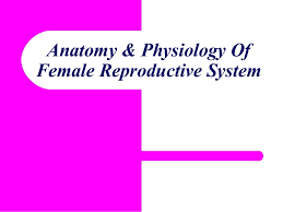 Anatomy Of Reproductive System Female Anatomy Physiology Of Female Reproductive System