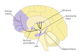 esnp educational consulting services execu sensory
