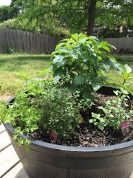 easy gardening project for kids