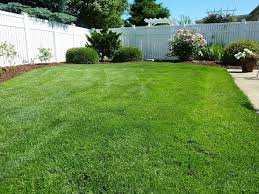 Average Cost Of Landscaping A Backyard 2017 Zoysia Sod Cost Zoysia Grass Sod Prices