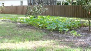 Vegetable Gardens In Florida by Fall Garden Update Aug 31 In Florida Zone 9 Youtube