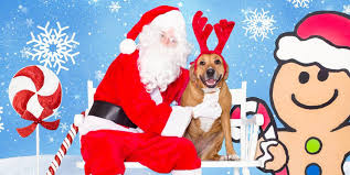 the best photos of dogs with santa 2016 edition