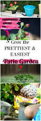 Miracle Grow Patio by Chemistry Hacks To Grow A Pretty U0026 Easy Patio Garden Even For Non