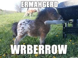 Ermahgerd Animal Memes - ermahgerd a tiny horse meme on imgur