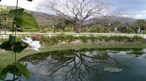 Largest Botanical Garden by Visit Jamaica Hope Botanical Gardens