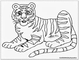 tiger drawing for children tiger coloring pages free printable