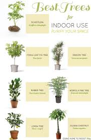 Air Purifying Plants 9 Air by Houseplant Tree Best 25 Best Indoor Trees Ideas On Pinterest