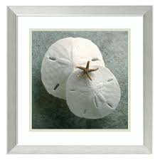 shadow box frame double matte mounted sand dollar with driftwood