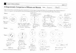 100 cell organelles review worksheet answers 28 periodic