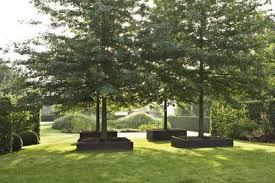 landscaping tips best trees for commercial properties in