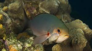 what is an example of parasitism in coral reefs reference com
