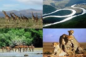 Seeking Port Elizabeth Safari Tours Tours In Port Elizabeth Skydive Tandem Tandem