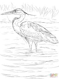 great blue heron stands in wetland coloring page free printable