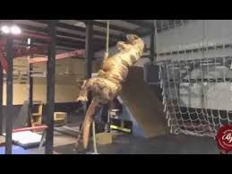 T Rex Costume Hilarious Jurassic World T Rex Costume Youtube