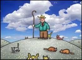 Herding Cats Meme - herding cats awesome me juxtapost