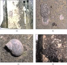 biodeterioration of construction materials state of the art and