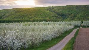 Landscape Syracuse Ny by Top 10 Hotels In Syracuse Ny 50 Hotel Deals On Expedia